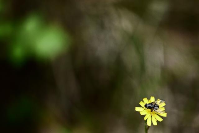 gulblomma.foto: BelleBlue©Photo