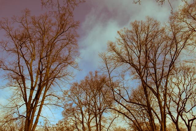 träd.foto: BelleBlue©Photo 2014