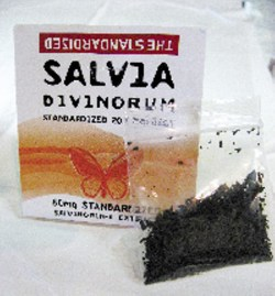 Small Of Where To Buy Salvia