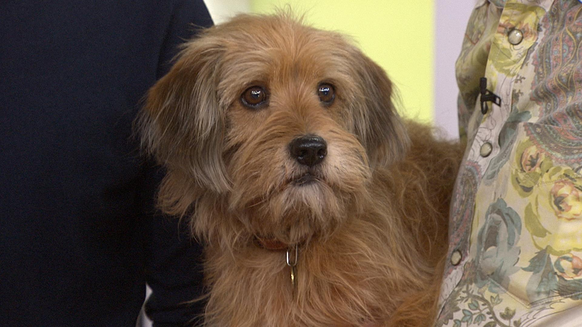 Fullsize Of What Kind Of Dog Was Benji