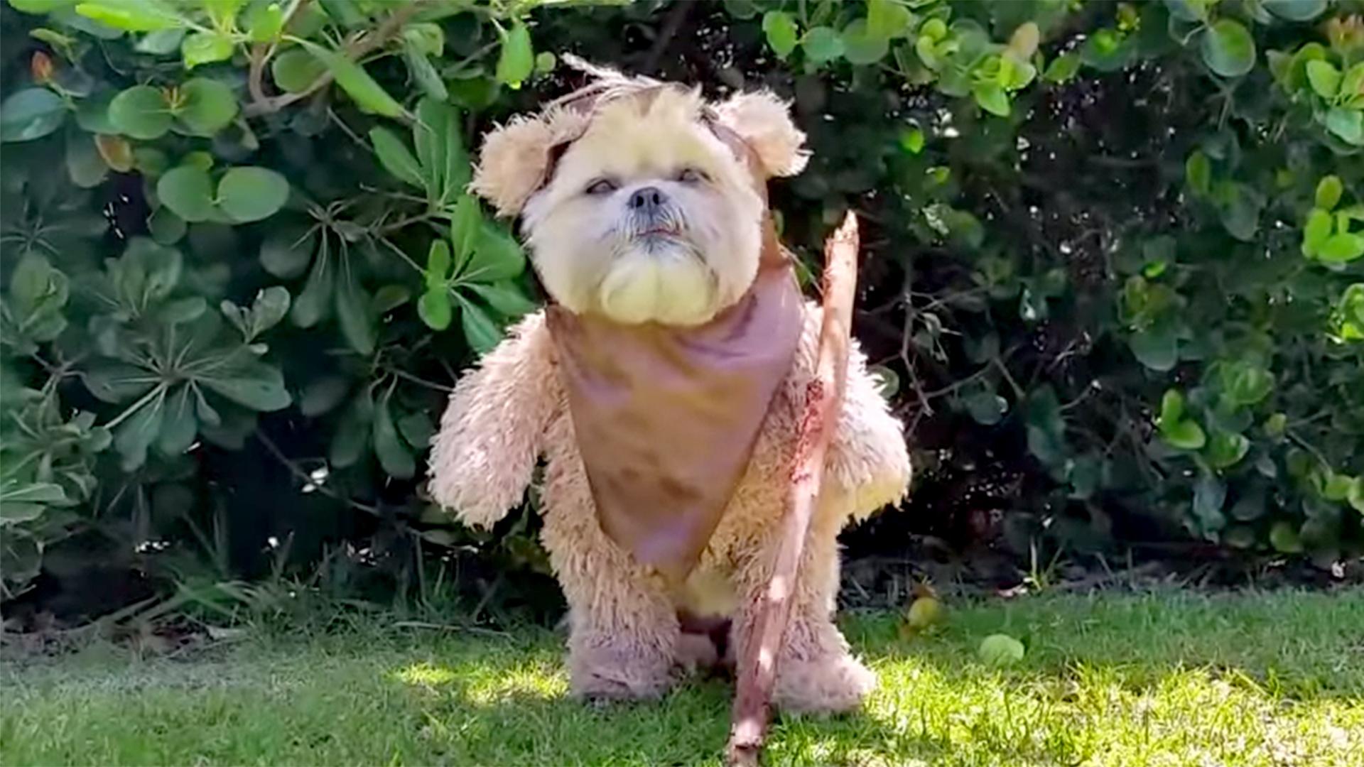 Fullsize Of Star Wars Dog