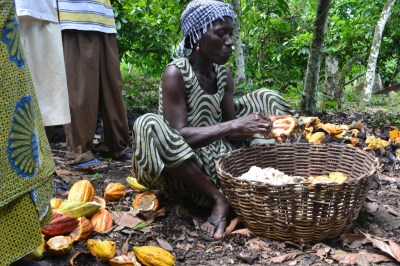 Chocolate Is a Bittersweet Way of Life in Ghana - NBC News