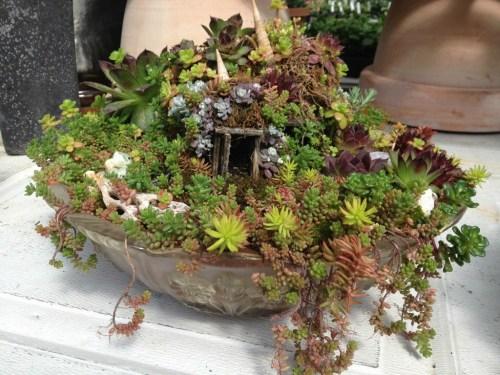Medium Of Succulent Fairy Gardens