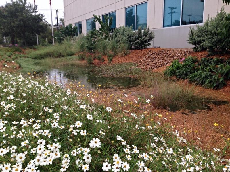 Large Of Rain Garden Plants