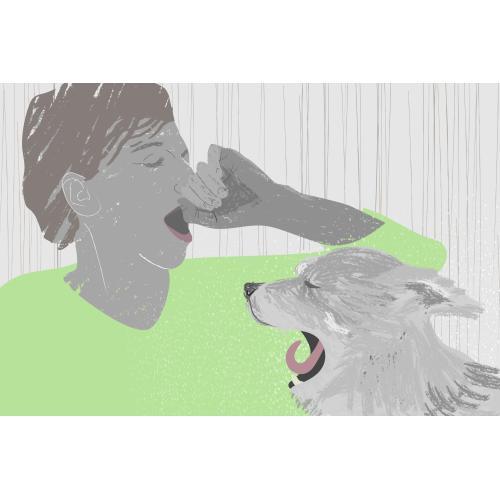 Medium Crop Of Why Do Dogs Yawn