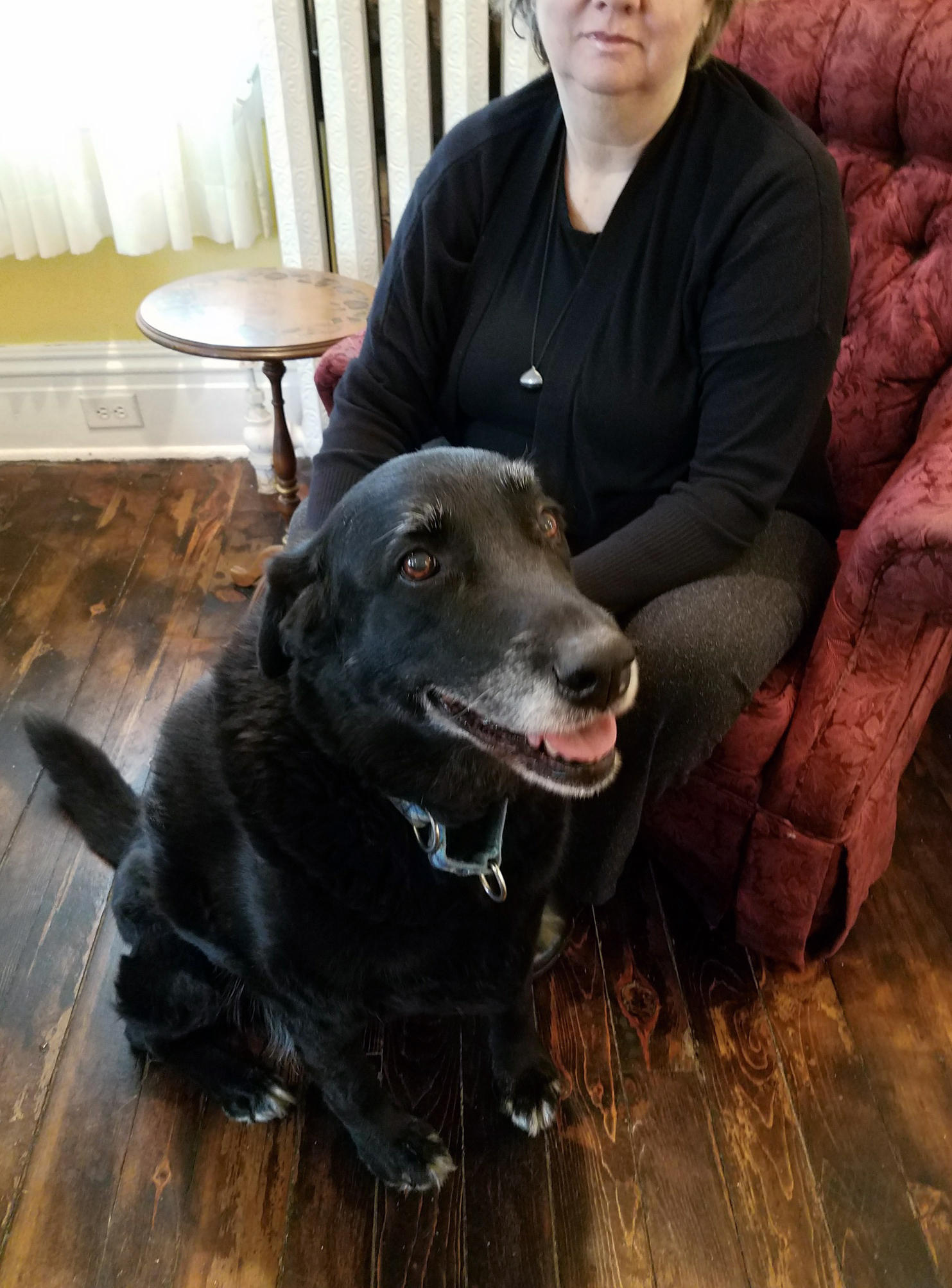 Debonair Good Dogs Reviews Good Dogs New Jersey Home Ten Years Black Lab Mix Abby Ran Away From She Years After She Went A Black Lab Is Returned To Her Home bark post Home For Good Dogs
