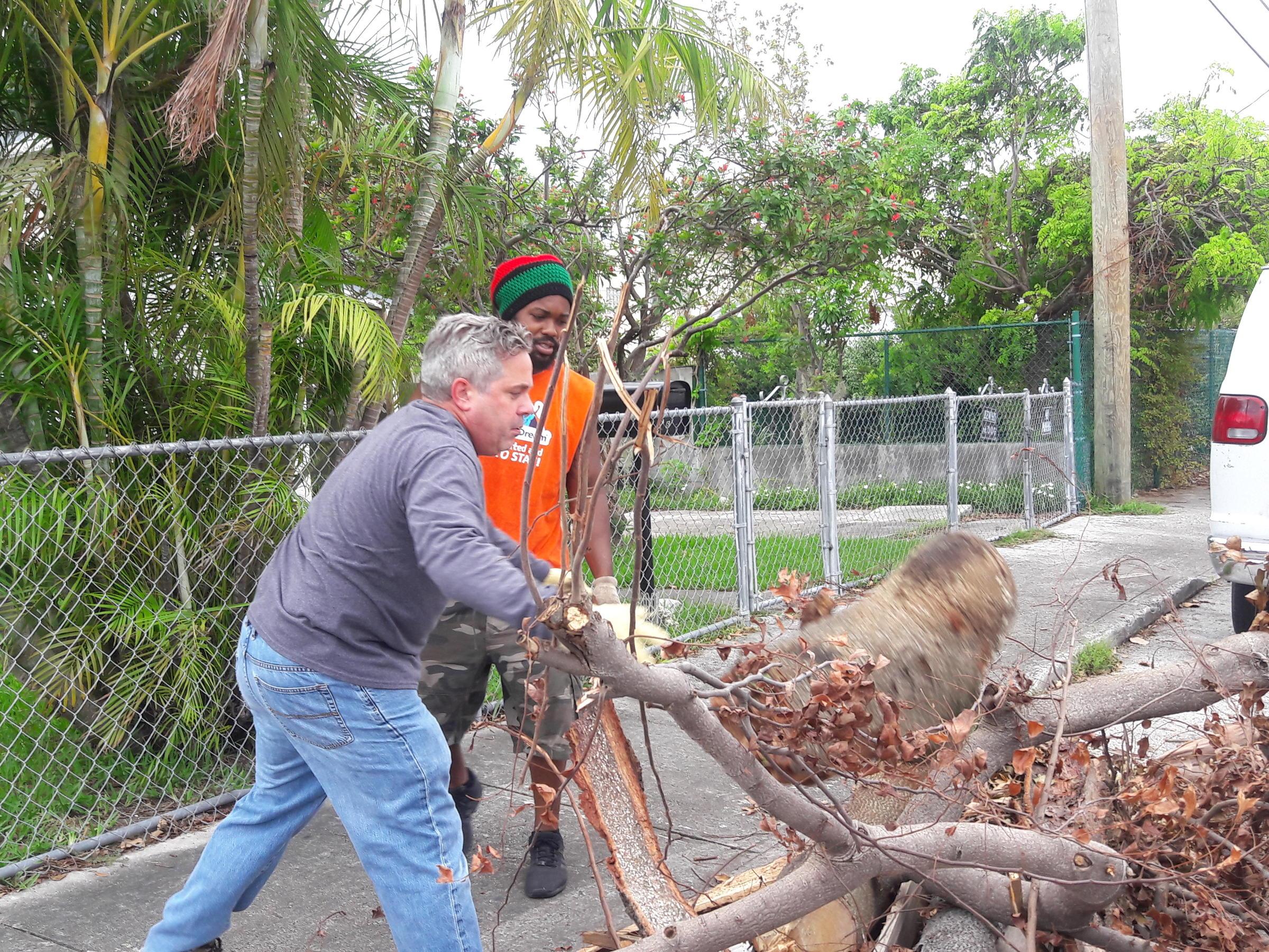 Fullsize Of Free Tree Removal