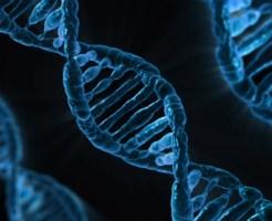 DNA (2) doc4
