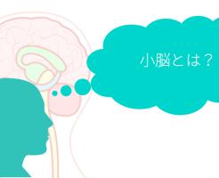 brain-4