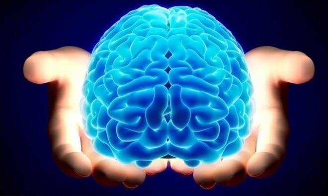 brain-735x440.jpg