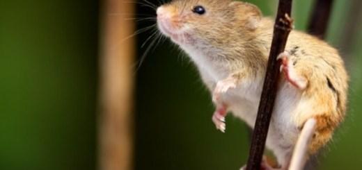 mouseonstick-medium