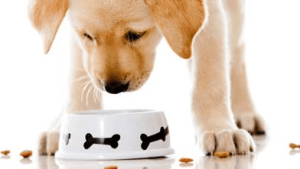 alimentacion labrador