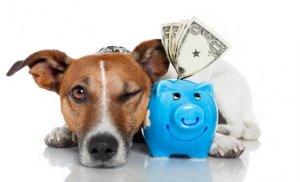 maneras-sencillas-ahorrar-dinero-perro