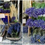 Provence lavender store