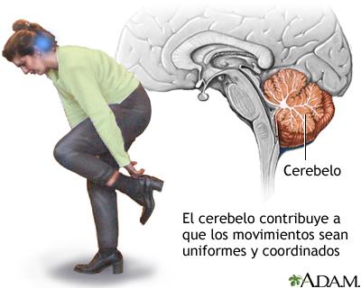 Función del cerebelo