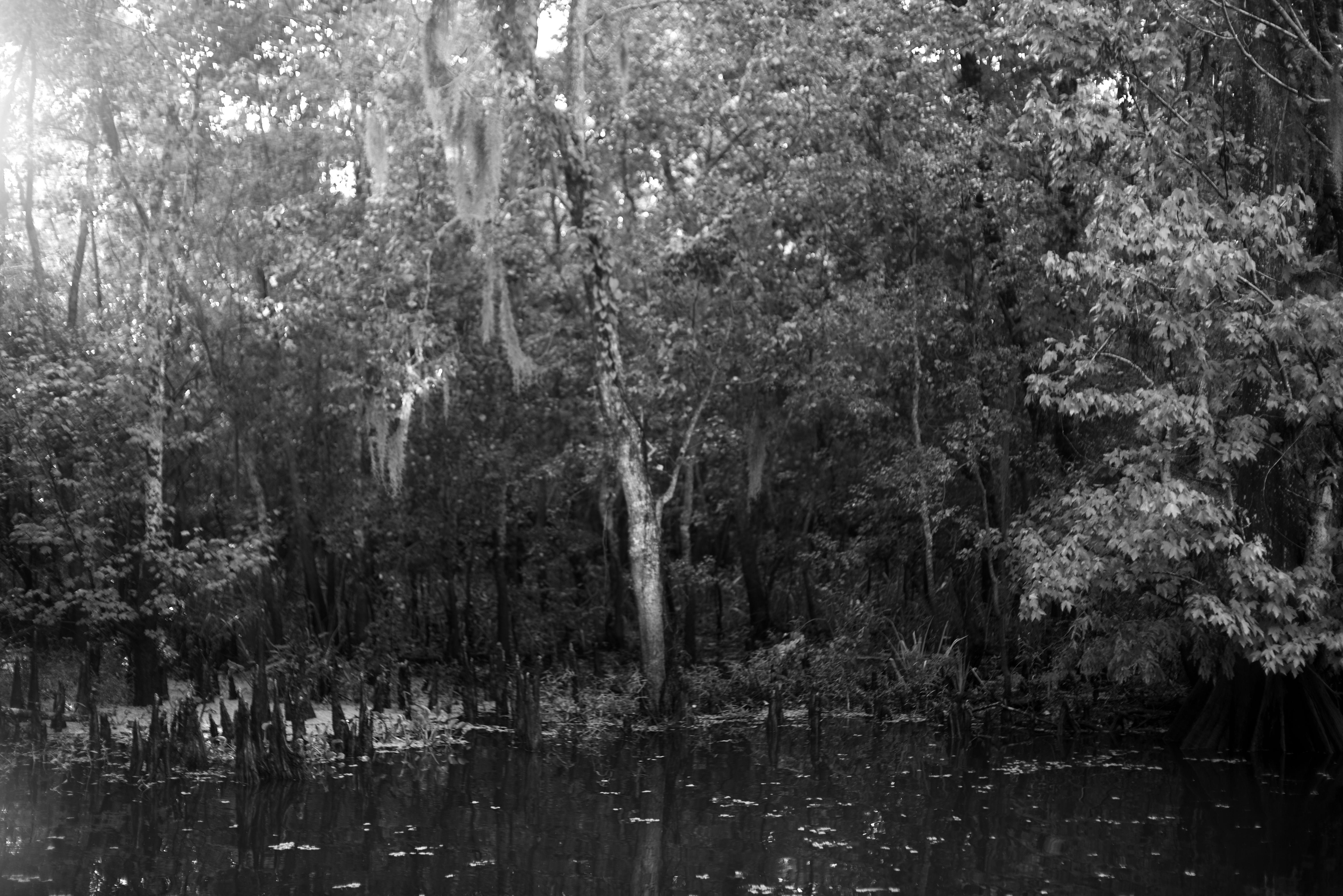 Cajun Swamp Tour
