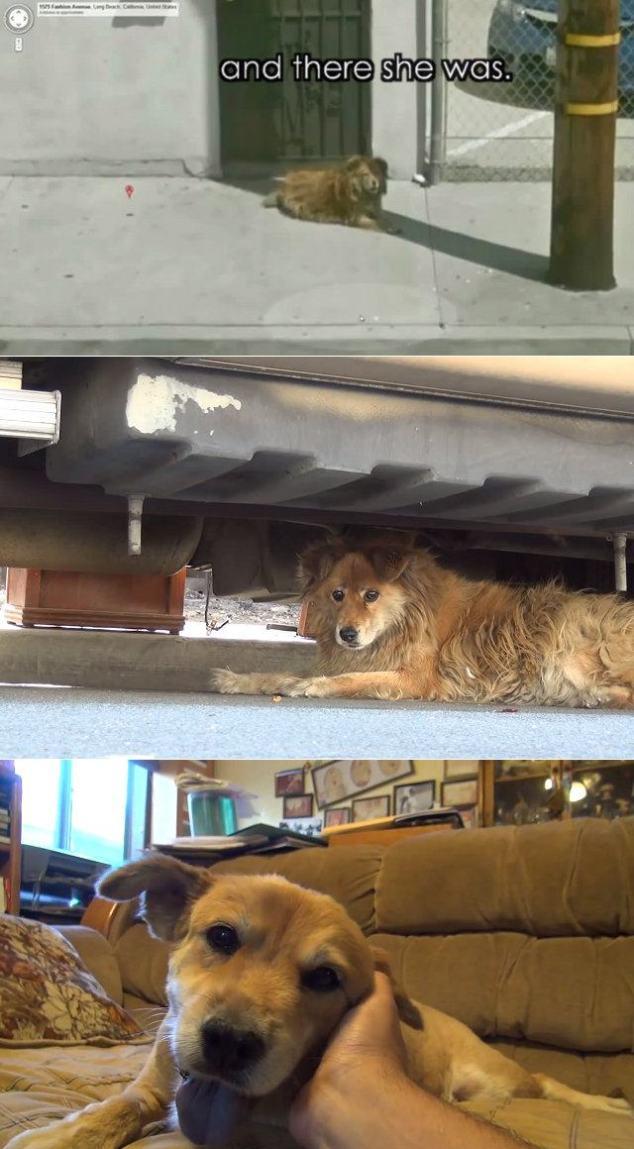 google-street-view-dog-rescue