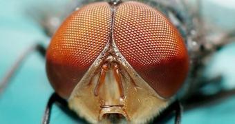 Nova lente criada à partir da combinação da visão humana e de insetos