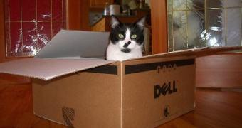 Problema de fabricação do Dell Latitude 6430u fez com que ele cheirasse a urina de gato