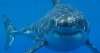 Os novos inimigos do Google: tubarões