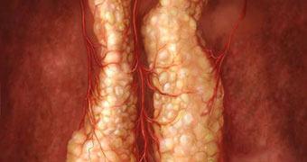Cientistas desenvolvem primeiro órgão funcional com células-tronco