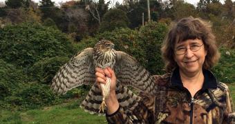 Cientistas usam câmeras para entender a nobre arte da falcoaria