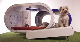 Uma casinha de cachorro high-tech, cortesia da Samsung