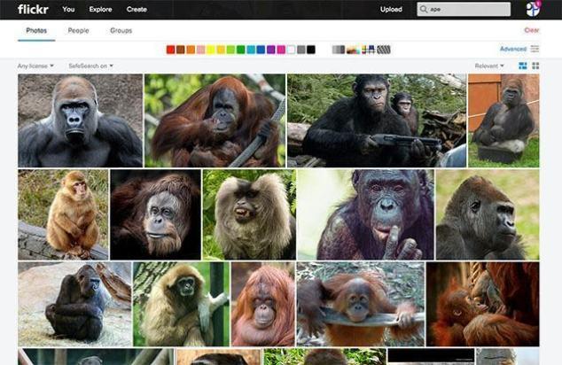 flickr_auto_tagging_racista