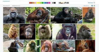 Flickr sendo racista em seu Auto-Tagging?