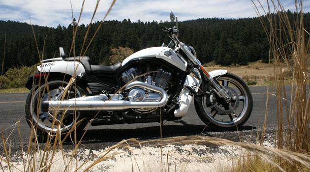 V-Rod Muscle la Harley –Davidson metrosexual