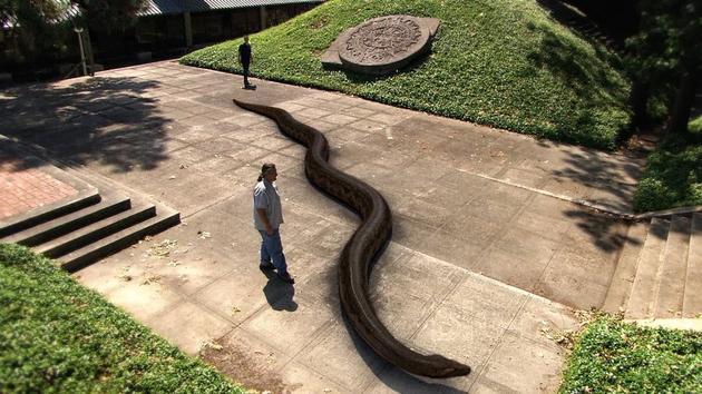 Titanoboa Prehistoric Monster Snake 6 Pictures Memolition