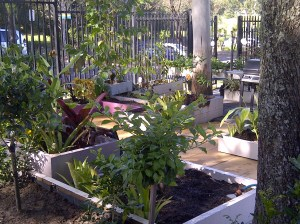 Upper level near our new shed, edge of the community garden and our new plants.
