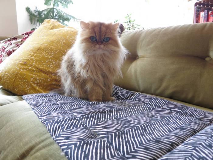Janery Catnip Cuddler