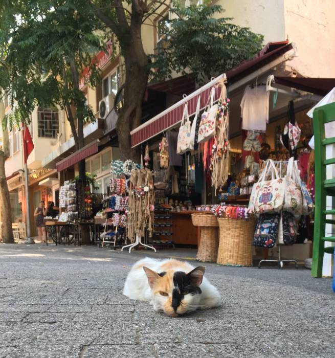 cats of Istanbul