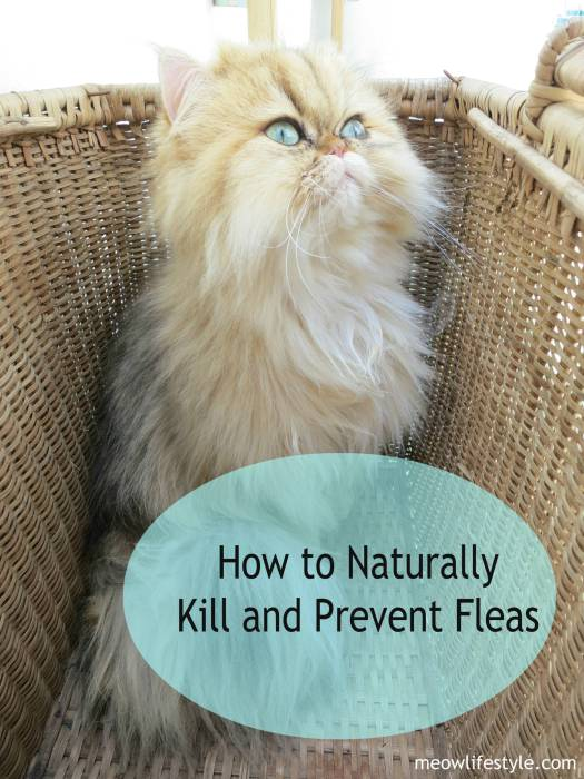 How to naturally kill and prevent fleas using essential oils