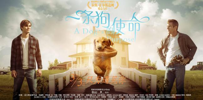 Movie a dog year