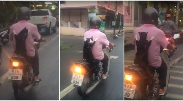 Gato passeando com seu dono em uma scooter na Tailândia