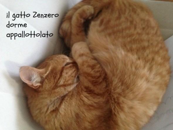 zenzero_05