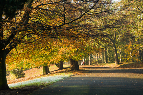 SEfton Park in the autumn