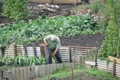 Liverpool allotments