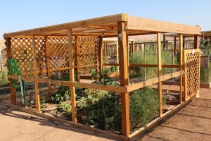 The Mesquite Community Heritage Gardens provide standards for individual garden plots that make the area attractive along with giving residents a place to grow their own produce. Photo by Barbara Ellestad.