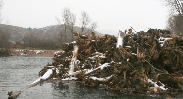 It's too early to say if the new law limiting liability to landowners for river restoration work done on their property will affect the design of large wood structures such as this one on the Methow River. Photo by Marcy Stamper