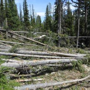 Location 2: lots of smaller diameter trees across trail. Trees laying in one direction, low complexity; two saw crews with swampers could easily clear in half a day. Tread work required at stream crossing. Photo courtesy USFS