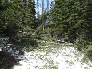 Additional photos from Location 1. Note branches on top of the snow. Photo courtesy USFS