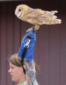 Tule, a barn owl, takes her turn on the center stage.  Photo by Don Nelson