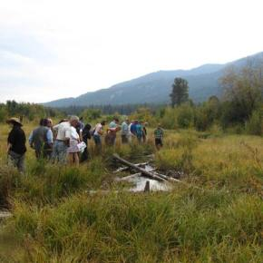 Colville Tribes get contract for salmon restoration in Methow