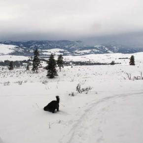 Photo by Marcy StamperDogged pursuit. The bountiful snows over the holiday season afforded not only human fun and recreation, but all manner of buried treasures for canines.