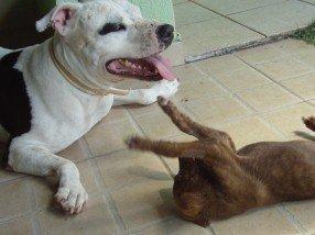 Cão adulto e filhote interagindo
