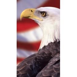 Small Crop Of Bald Eagle Wallpaper