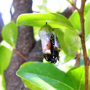 miami-beach-botanical-garden-monarch